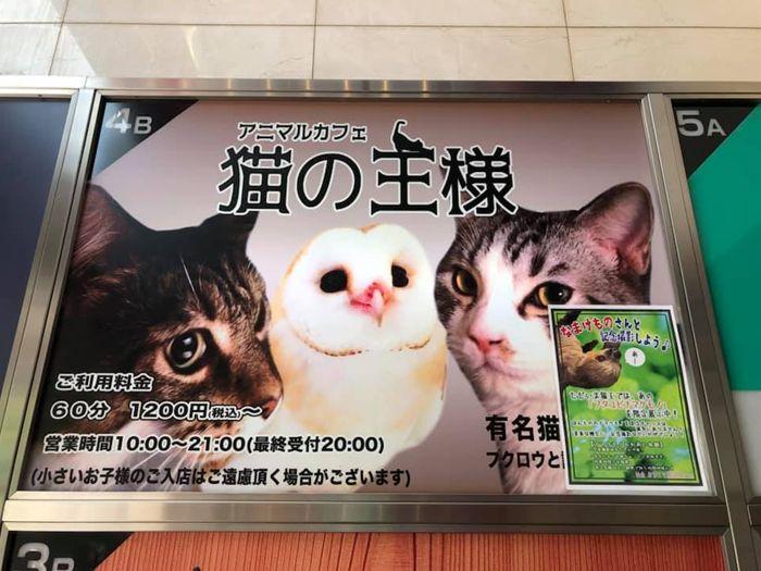猫の王様 川口 猫カフェ