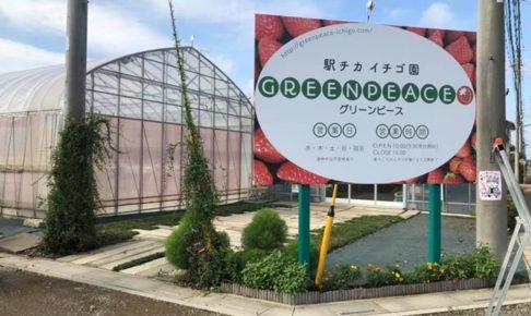 駅チカ イチゴ園 グリーンピース